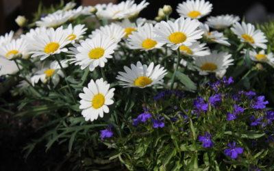 Ilmoittaudu harrastusryhmien kevätkaudelle